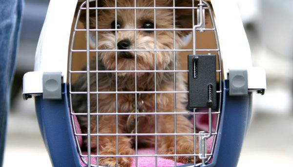a cute puppy inside a pet cage